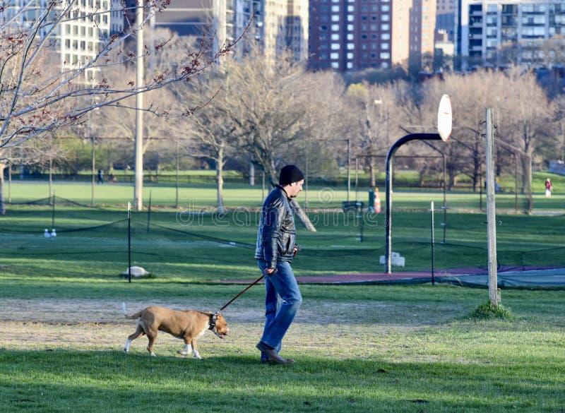Człowiek chodzący swoim psem zdjęcie royalty free