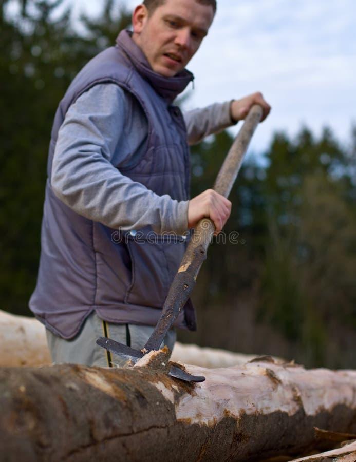 człowiek z szczekać obierania drzewa obraz stock