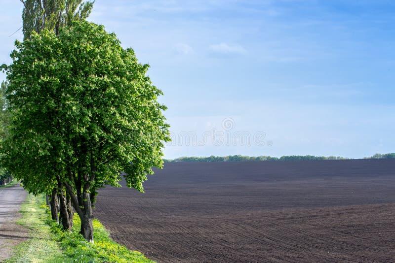 Czarna żyzna ziemia na rozpryskanym wiosny polu Krajobraz zdjęcie stock
