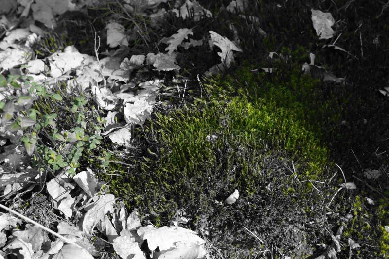 Czarna biel zieleń fotografia stock