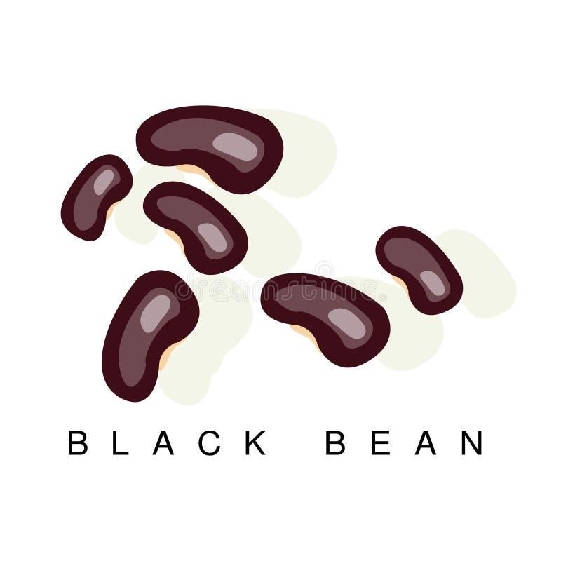Czarna fasola, Infographic ilustracja Z Realistyczną pelengów Legumes rośliną I Swój imię, ilustracja wektor