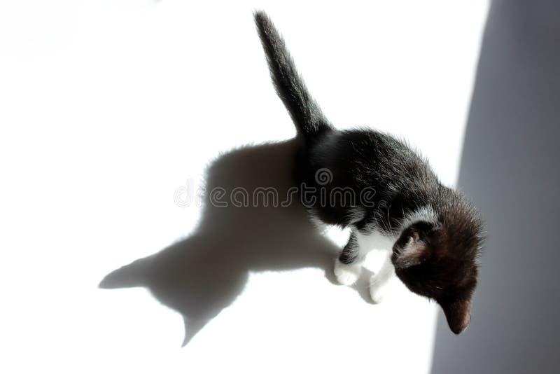 Czarna figlarka I Jego cień Nad Białym tłem obraz royalty free