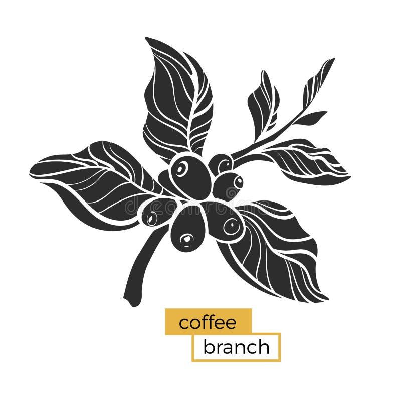 Czarna gałąź kawowy drzewo z liśćmi i naturalnymi kawowymi fasolami Sylwetka, kształt wektor royalty ilustracja