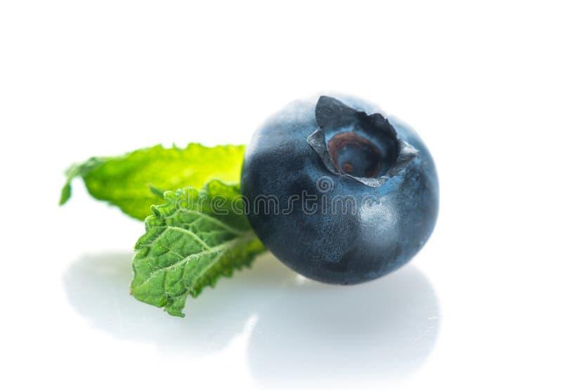 Czarna jagoda Świeże jagody odizolowywać na białym tle zdjęcie royalty free