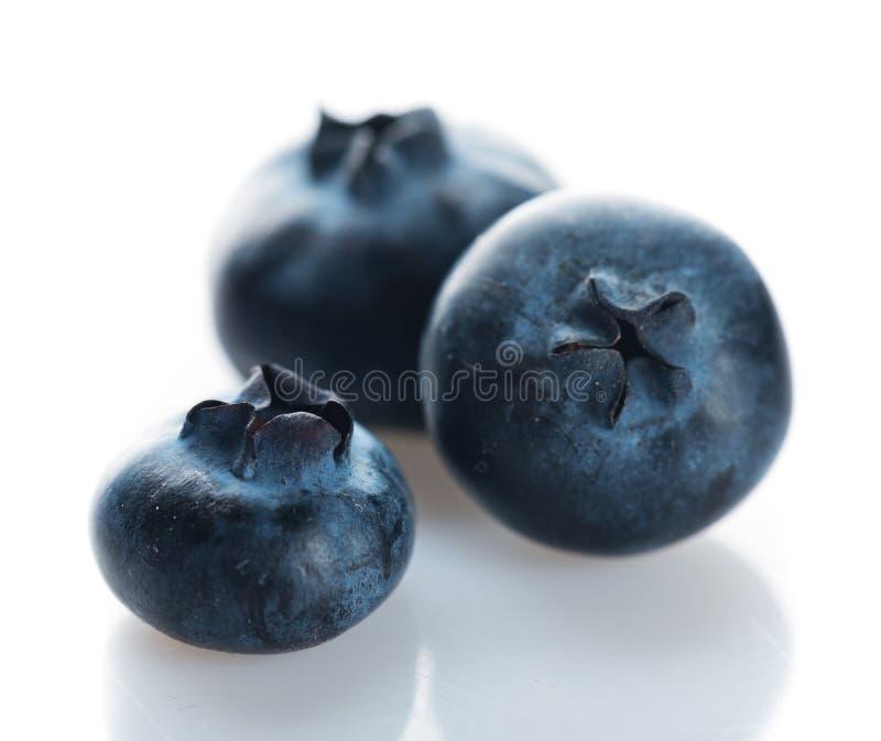 Czarna jagoda świeże owoce zdjęcie royalty free