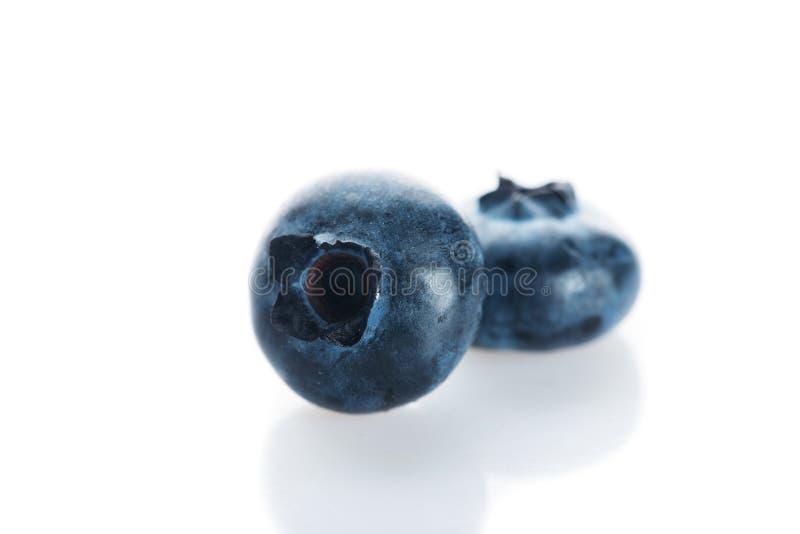 Czarna jagoda świeże owoce fotografia royalty free