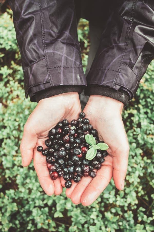 Czarna jagoda w dziewczyn rękach fotografia stock