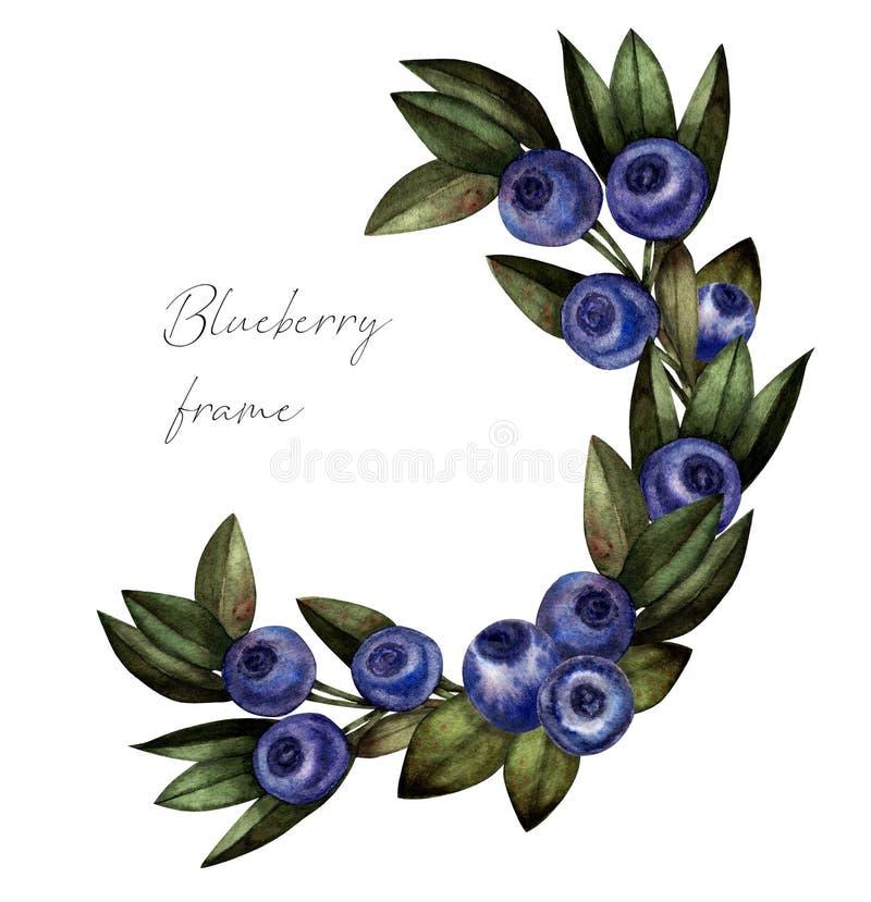 Czarna jagoda wianku akwarela, botaniczna ilustracja ilustracji
