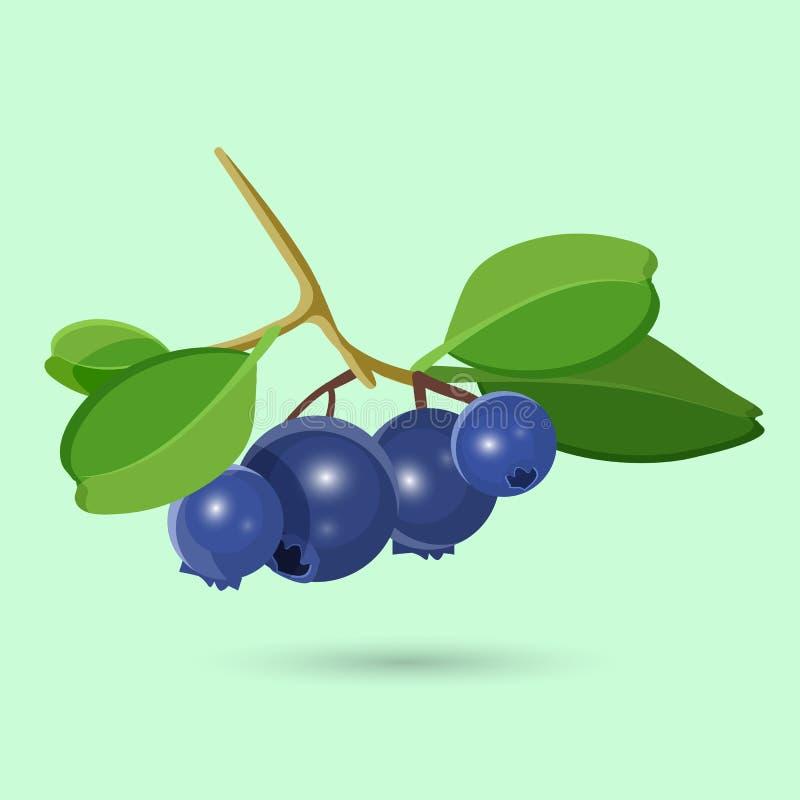 Czarna jagoda z zielonym liściem na bielu Botaniczna Wektorowa ilustracja royalty ilustracja
