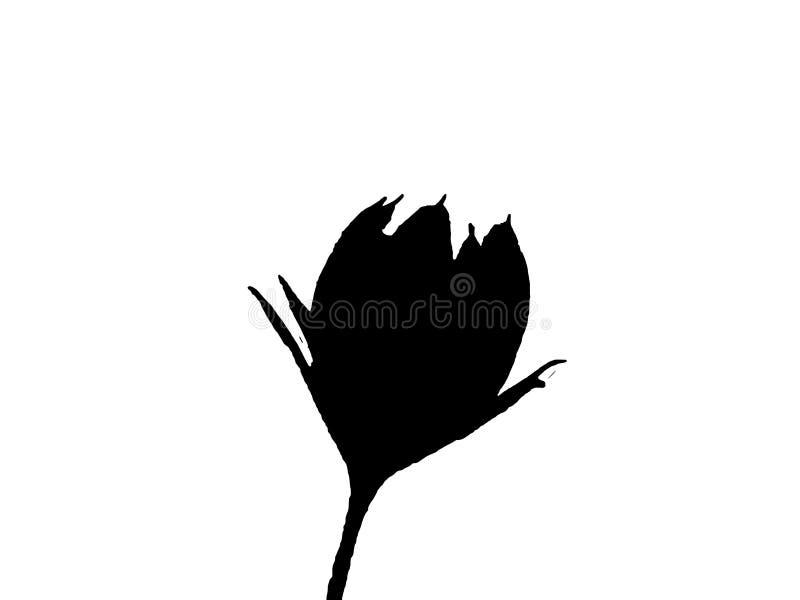 czarna kwiecista ilustracja na białym tle ilustracji