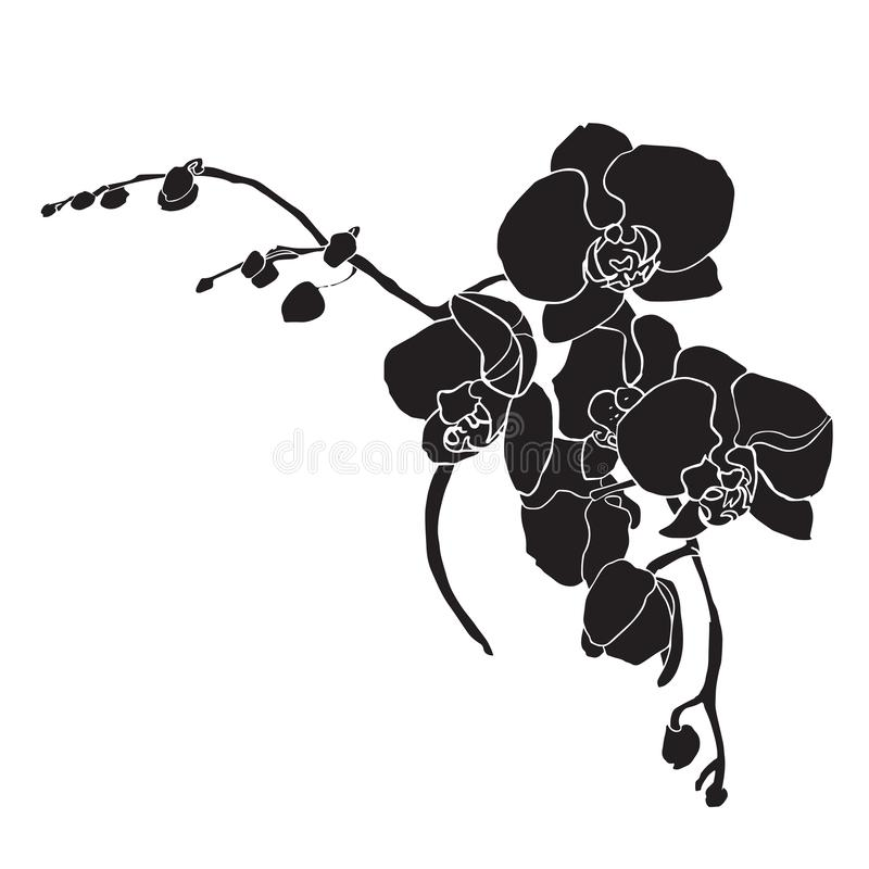 Czarna orchidea z białym konturem royalty ilustracja