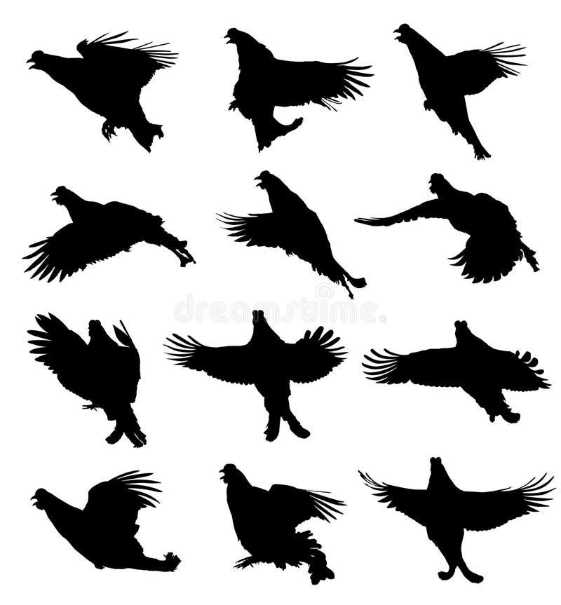 Czarna pardwa w lot sylwetki secie ilustracji