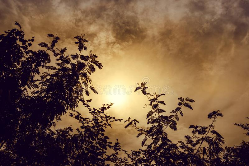 Czarna sylwetka na wierzchołku drzewo, niebo z żółtym słońcem fotografia royalty free