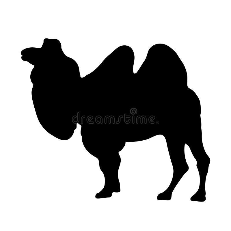 Czarna sylwetka trwanie wielbłąd na białej tło wektoru ilustraci ilustracji