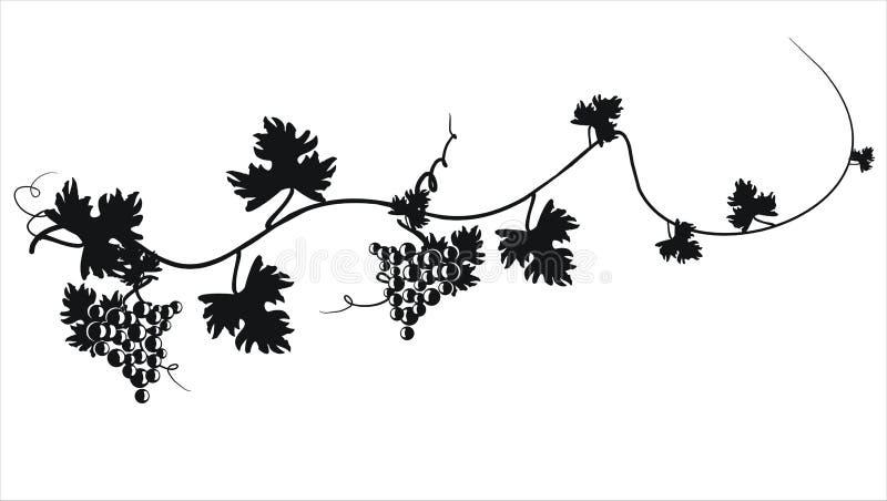 Czarna sylwetka winogrona. Wektorowa ilustracja. ilustracja wektor
