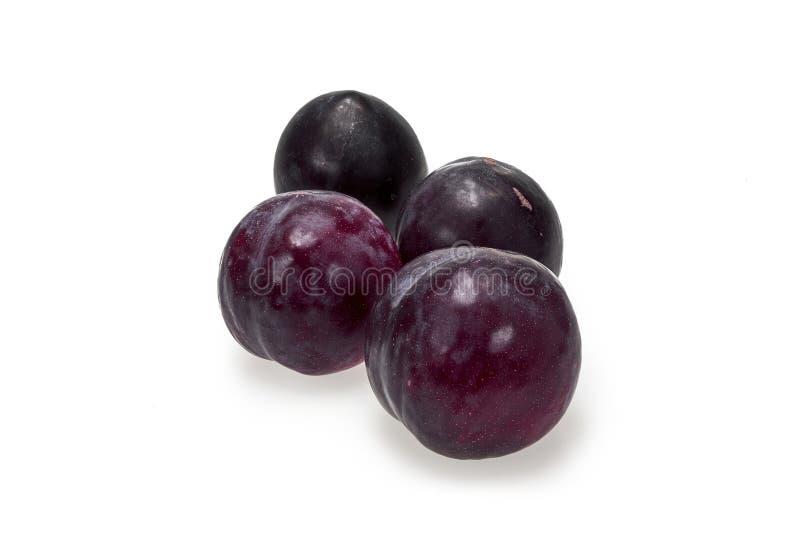 Czarna złocista śliwka, soczysta owoc, i możemy być jedzący świezi zdjęcia royalty free