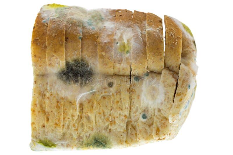 Czarne żółte błękitne foremki na pleśniejącym starym wholewheat chlebie odizolowywającym zdjęcia royalty free