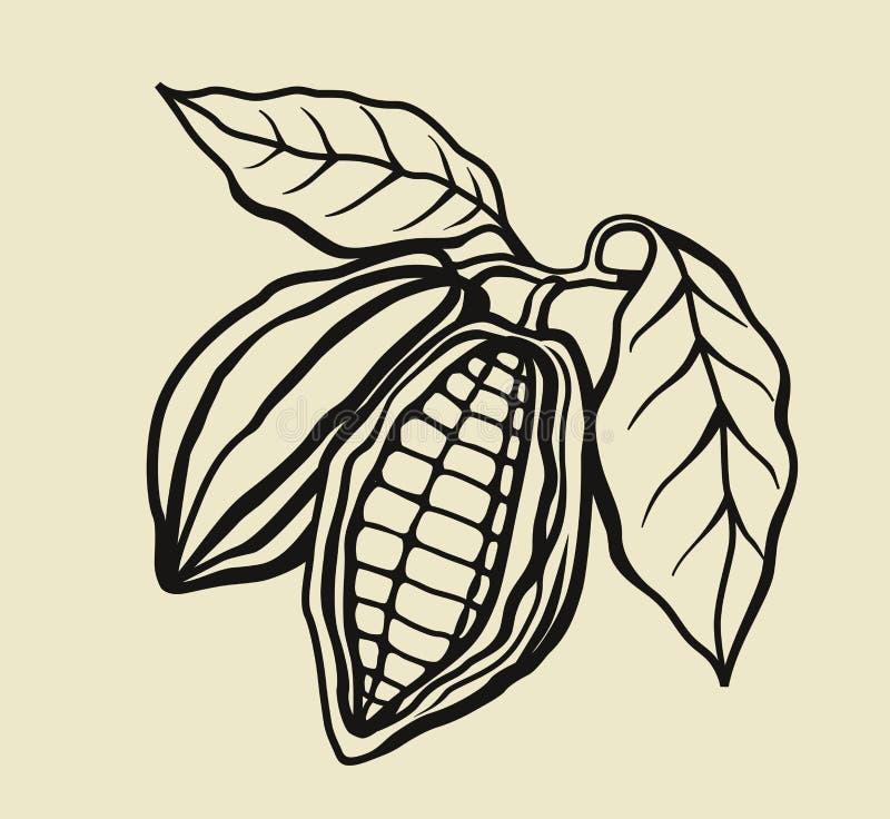 Czarne cacao fasole ilustracji