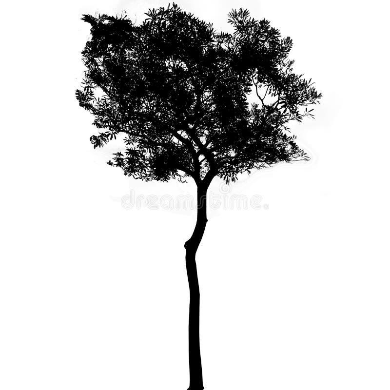 Czarne drzewne sylwetki na białym tle, sylwetka drzewa royalty ilustracja