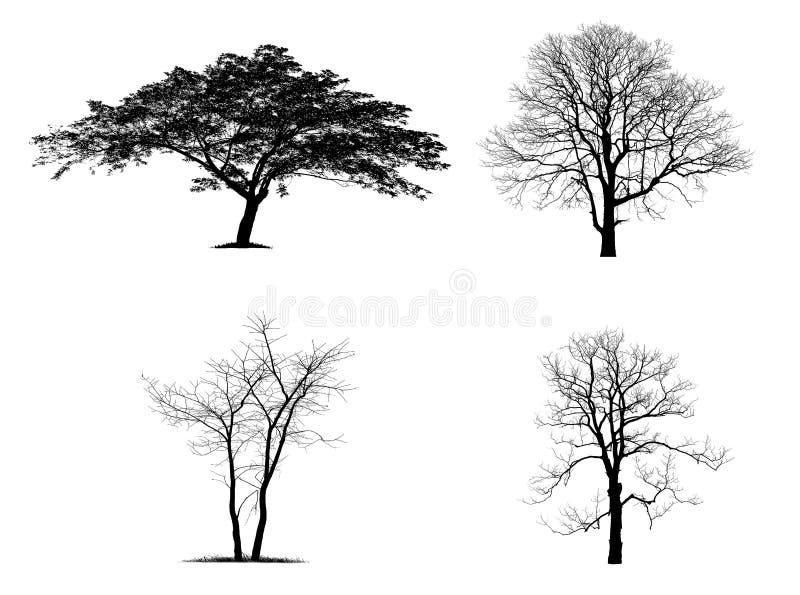 Czarne drzewne sylwetki odizolowywać na białym tle ilustracja wektor