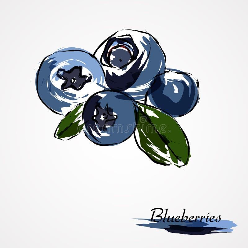 Czarne jagody, huckleberries ilustracji
