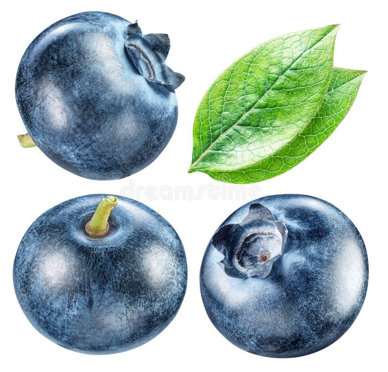 Czarne jagody i czarna jagoda liście Makro- strzał Ścinek ścieżki f zdjęcie stock