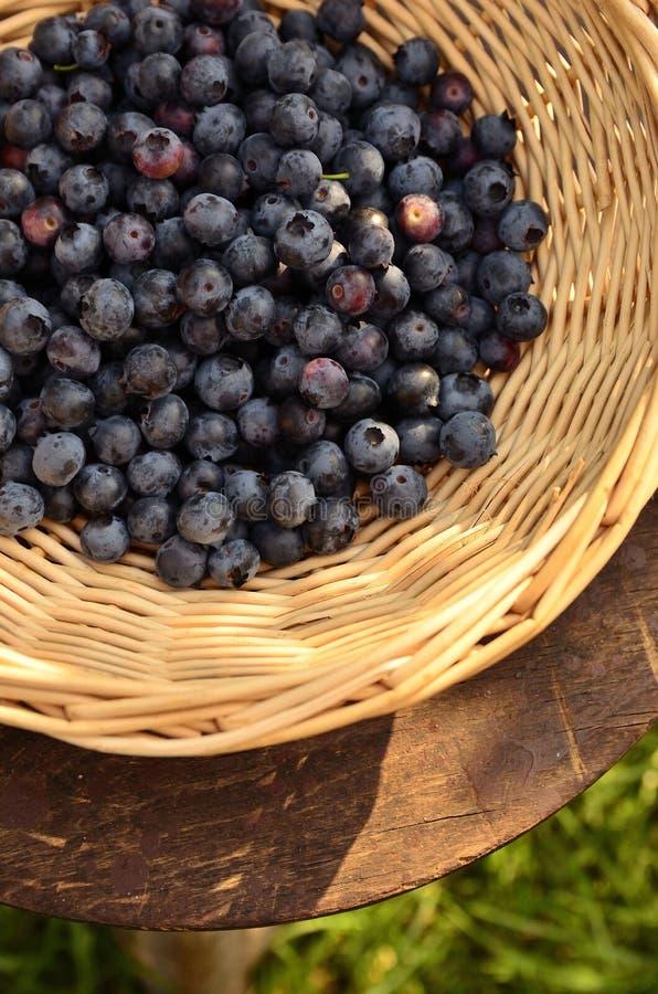 Czarne jagody w koszu obraz stock