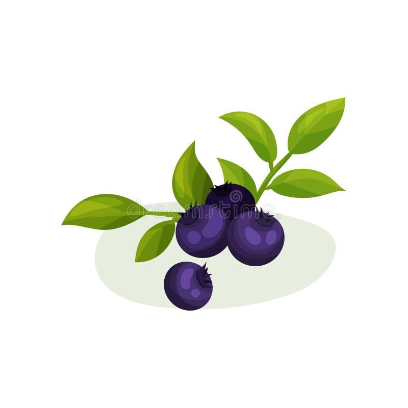Czarne jagody z zielonymi liśćmi Naturalna świeża żywność Dekoracyjny płaski wektorowy element dla plakata, jogurtu lub soku pako ilustracji