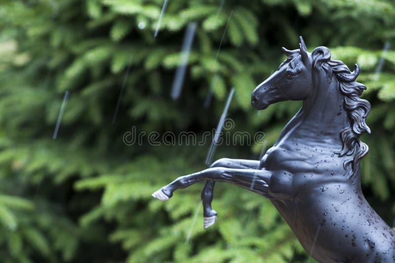 Czarne końskie postaci jedlinowego drzewa deszczu krople zdjęcia stock