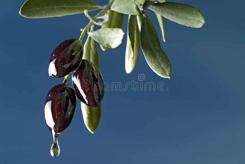 - czarne oliwki kapiące obraz stock