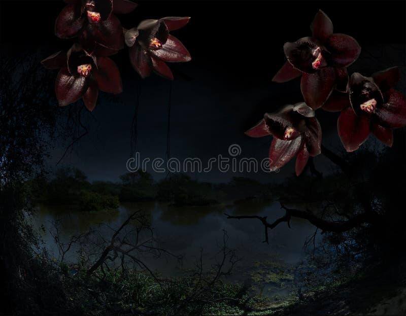 Czarne orchidee na tropikalnym dżungli tle zdjęcie royalty free