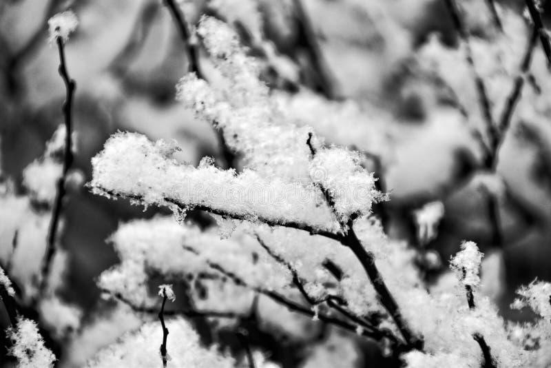 Czarne zim gałąź zakrywać z białym śniegiem obrazy stock