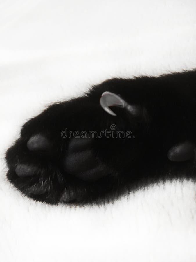 Czarnego kota łapa z ostrzem drapa na białym tle obraz royalty free