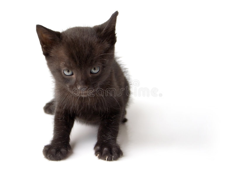 czarnego kota, dzieciaku fotografia stock