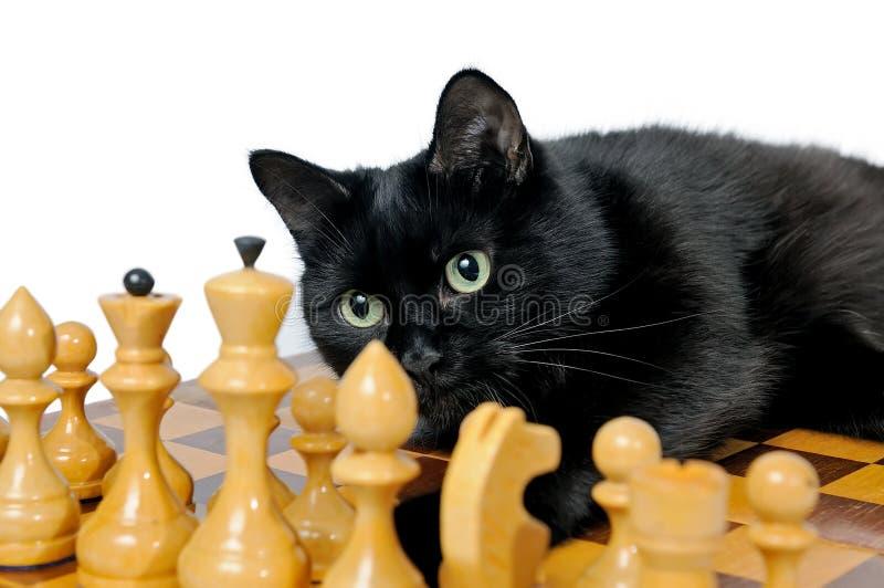 Czarnego kota lying on the beach na chessboard i patrzeć białe bierki zdjęcia stock