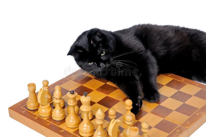 Czarnego kota lying on the beach na chessboard i patrzeć białe bierki obraz stock