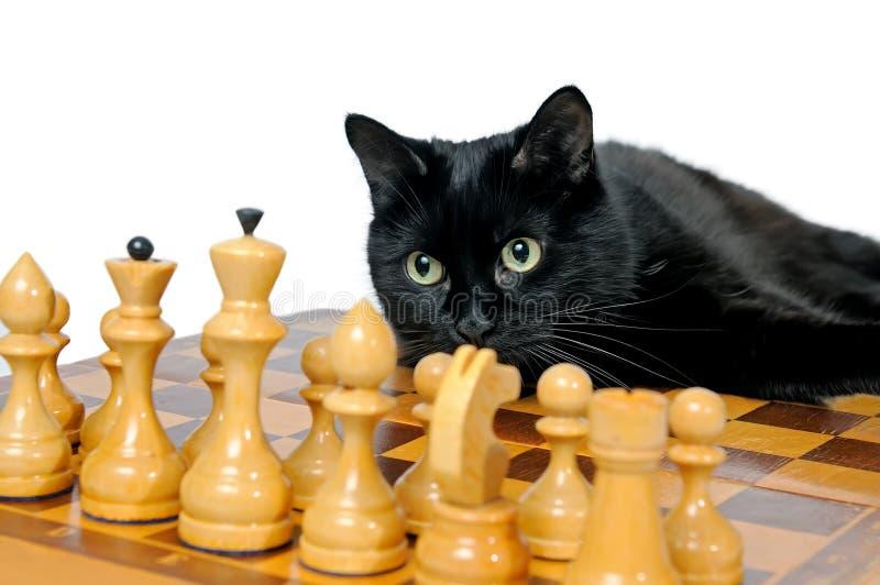 Czarnego kota lying on the beach na chessboard i patrzeć białe bierki fotografia stock