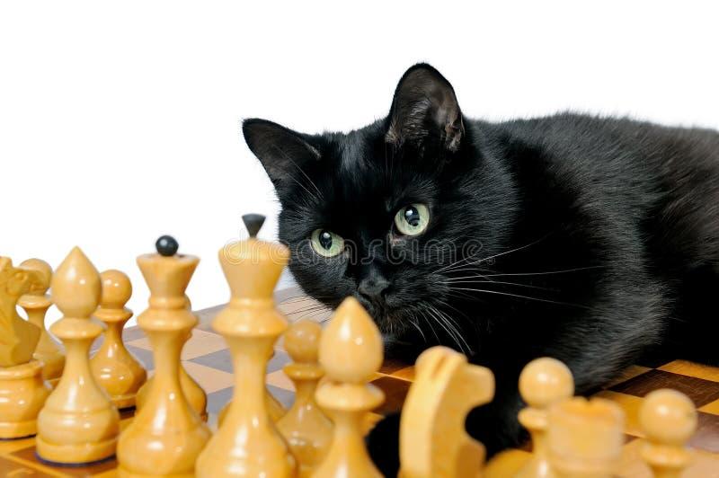 Czarnego kota lying on the beach na chessboard i patrzeć białe bierki obraz royalty free