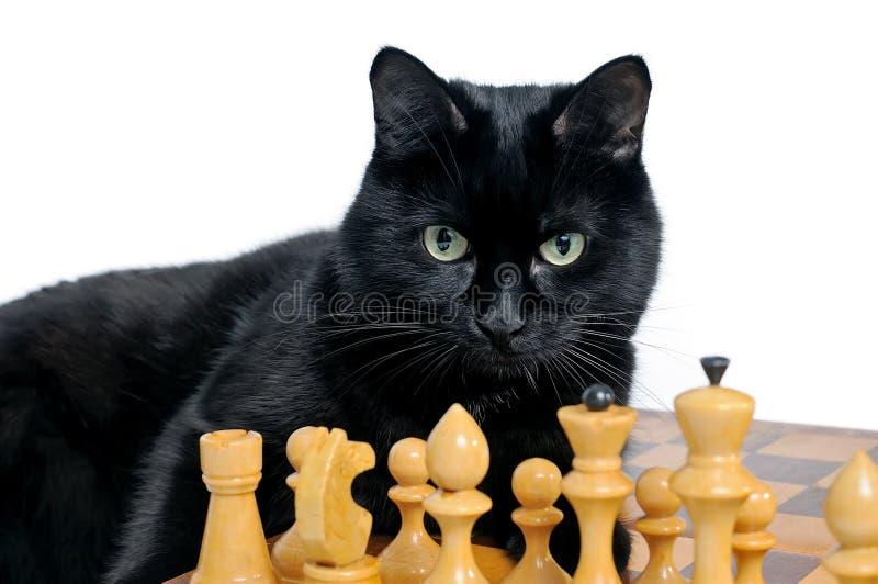 Czarnego kota lying on the beach na chessboard i patrzeć białe bierki zdjęcia royalty free