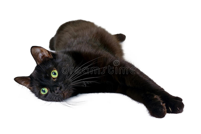 Czarnego kota lying on the beach na swój stronie odizolowywającej na białym tle obrazy royalty free