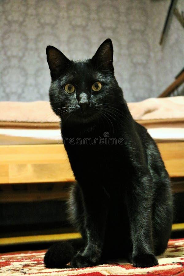 czarnego kota marsik, ilustracja wektor