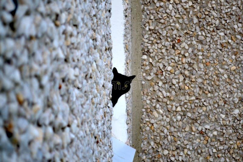 Czarnego kota spojrzenia z okno obrazy royalty free
