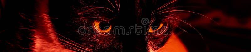Czarnego kota twarzy przera?aj?cy ponury portret na czarnym tle zdjęcia stock