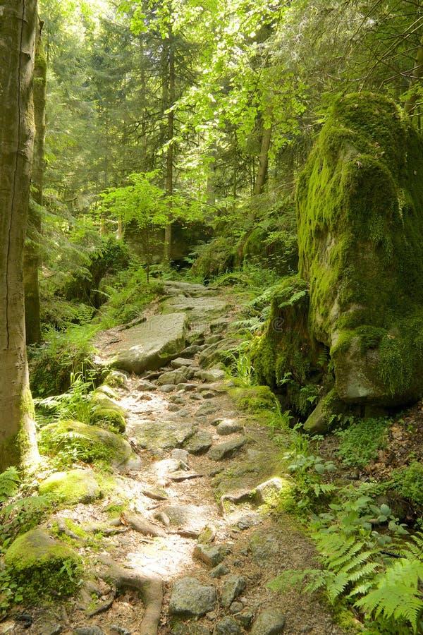 Czarnego lasu Skalisty Wycieczkuje ślad obrazy royalty free