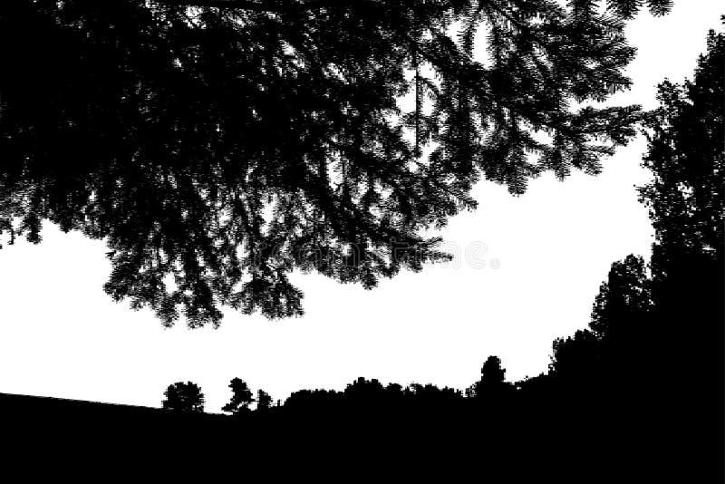 Czarnego lasu sylwetka pojedynczy białe tło Wektor il ilustracja wektor