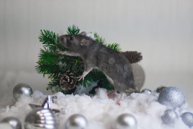 Czarnego nowego roku szczur w białym śniegu projekta wizerunku drzewa zima Mysz obraz stock