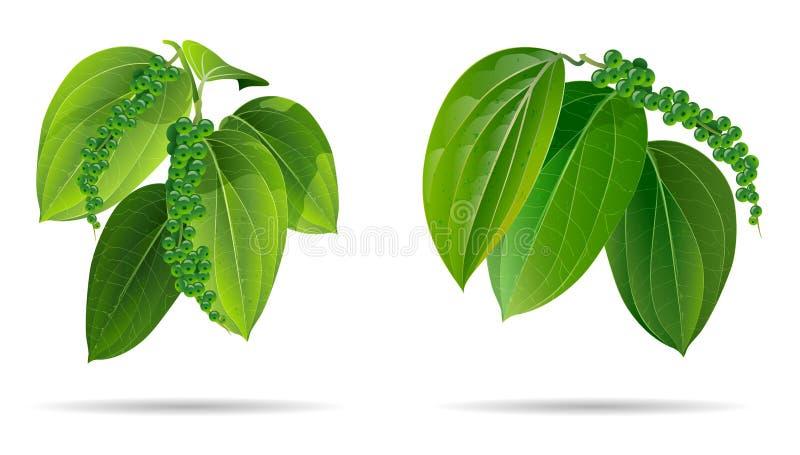 Czarnego pieprzu liści zieleń odizolowywająca na wihte tle ilustracji