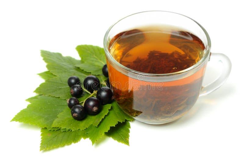 Czarnego rodzynku herbata obraz stock