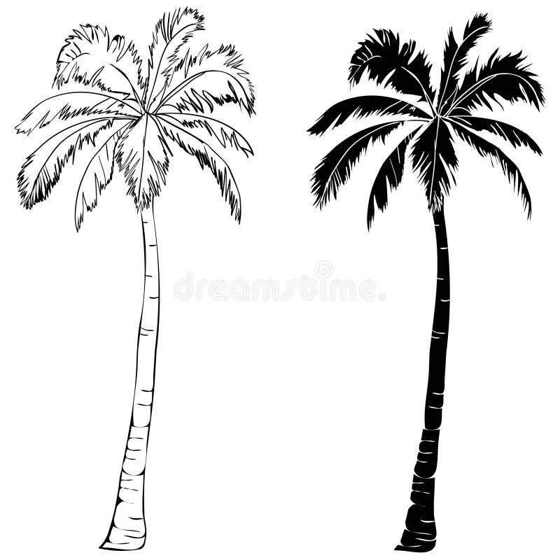 Czarnego wektoru drzewka palmowego sylwetki pojedyncza ikona odizolowywająca royalty ilustracja