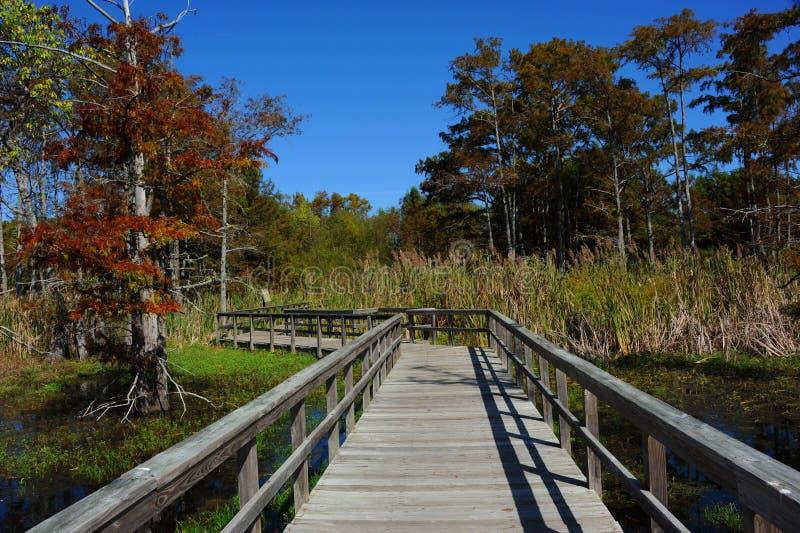 Czarnego zalewiska rezerwata dzikiej przyrody Jeziorny Krajowy Boardwalk obrazy stock